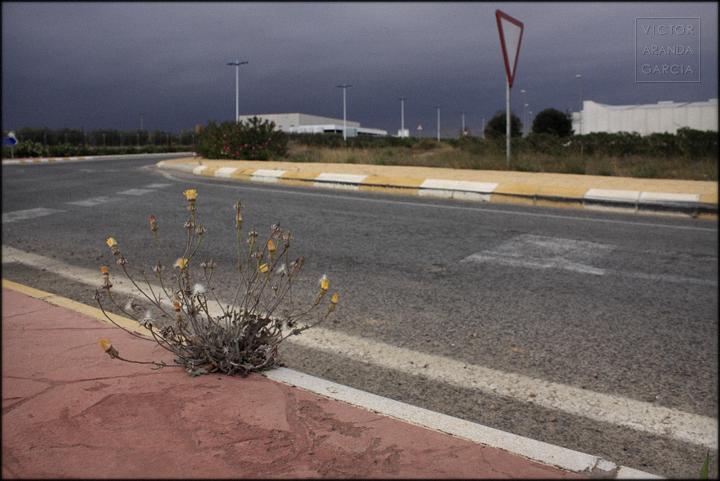 fotografía, naturaleza urbana, Fuente Álamo, carretera, flores
