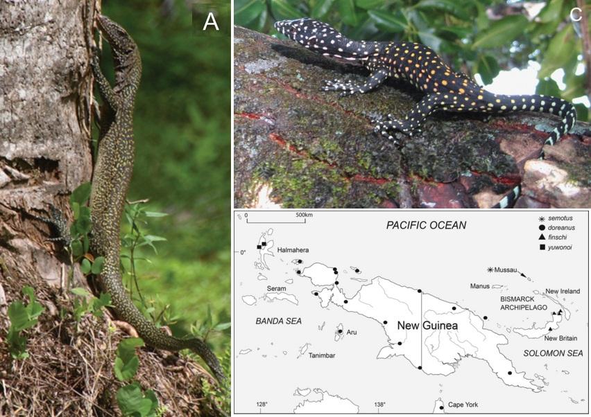 Frog Natural History Phylogeny