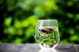 ماهي فوائد الشاي الاخضر بالتفصيل