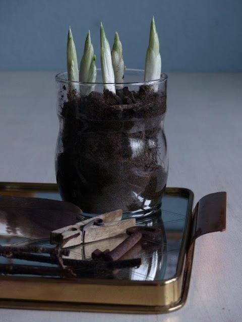 Frühlingsdeko Vorfreude DIY Frühblüher bepflanzte Vasen Feder Schlüssel Erinnerungsstückegünstig einfach