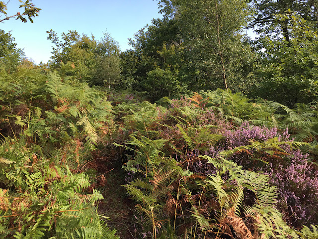 A path on Ashdown Forest, 31 August 2017.