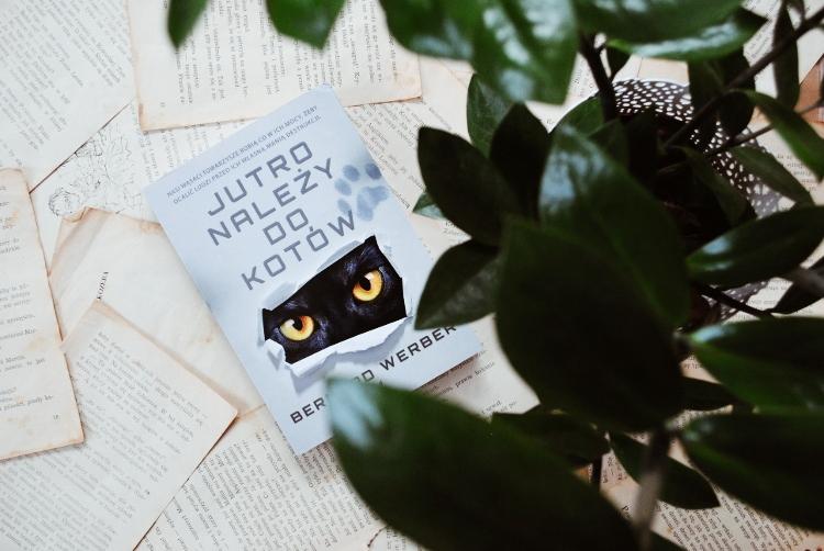 Jutro należy do kotów – Bernard Werber [RECENZJA]
