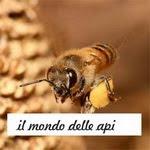 homescooling e il mondo delle api