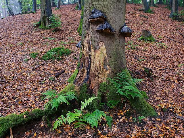 Regen im Wald