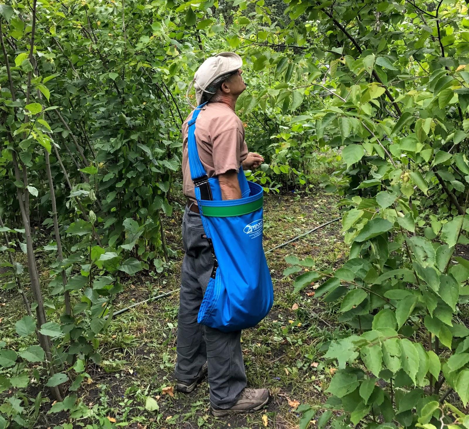 Riverbend Hazelnuts: Harvest & Japaneses Beetles