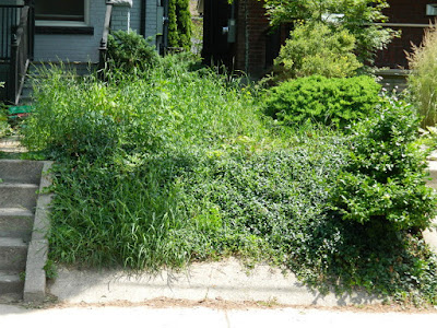 Palmerston Front Garden Cleanup before by Paul Jung Gardening Services Toronto