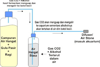 membuat co2 diy aquascape