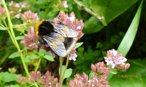 best plants for attracting bees