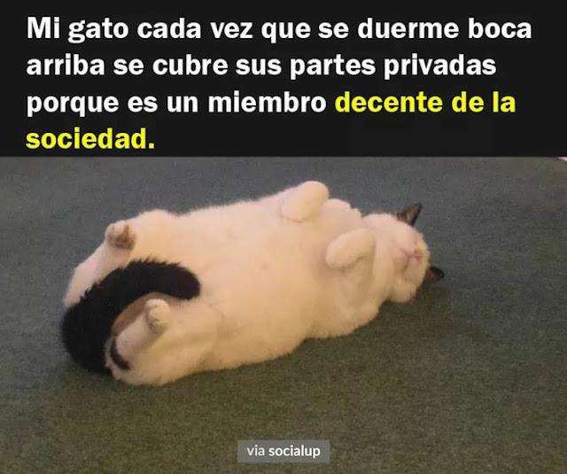 Mi gato cuando duerme panza arriba se tapa la partes con la cola