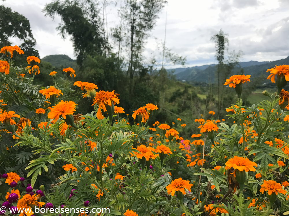 Sirao Flower Farm, Cebu