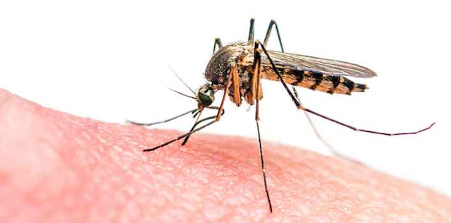 जीका वायरस संक्रमण के आठ नए मामले