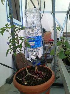 tips merawat tanaman