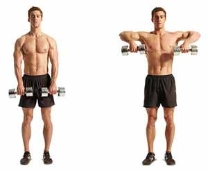 Upright Dumbbell Rowing
