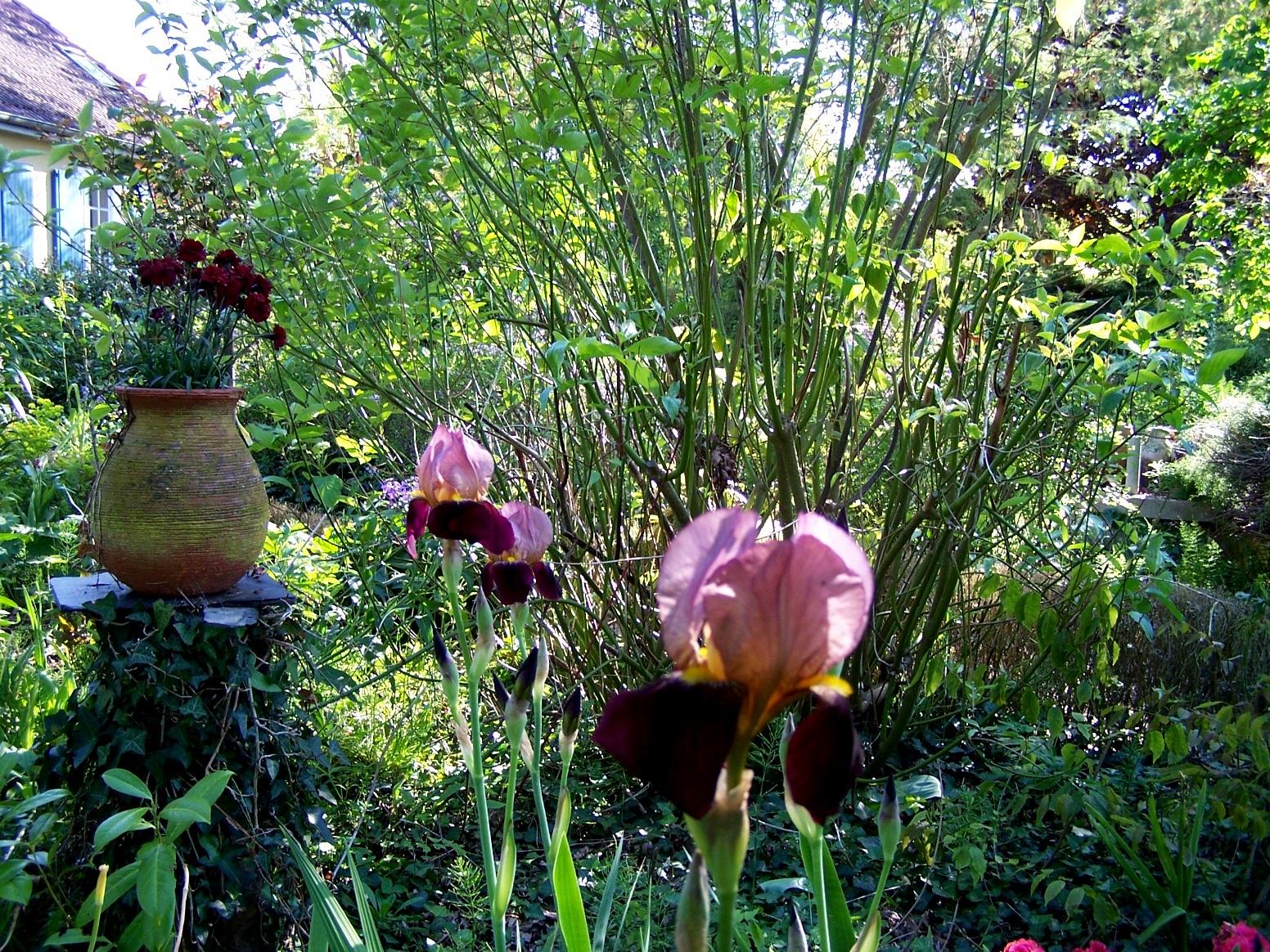 Bienvenue dans mon jardin a fill sur sarthe iris ni vu for Bienvenue dans mon jardin