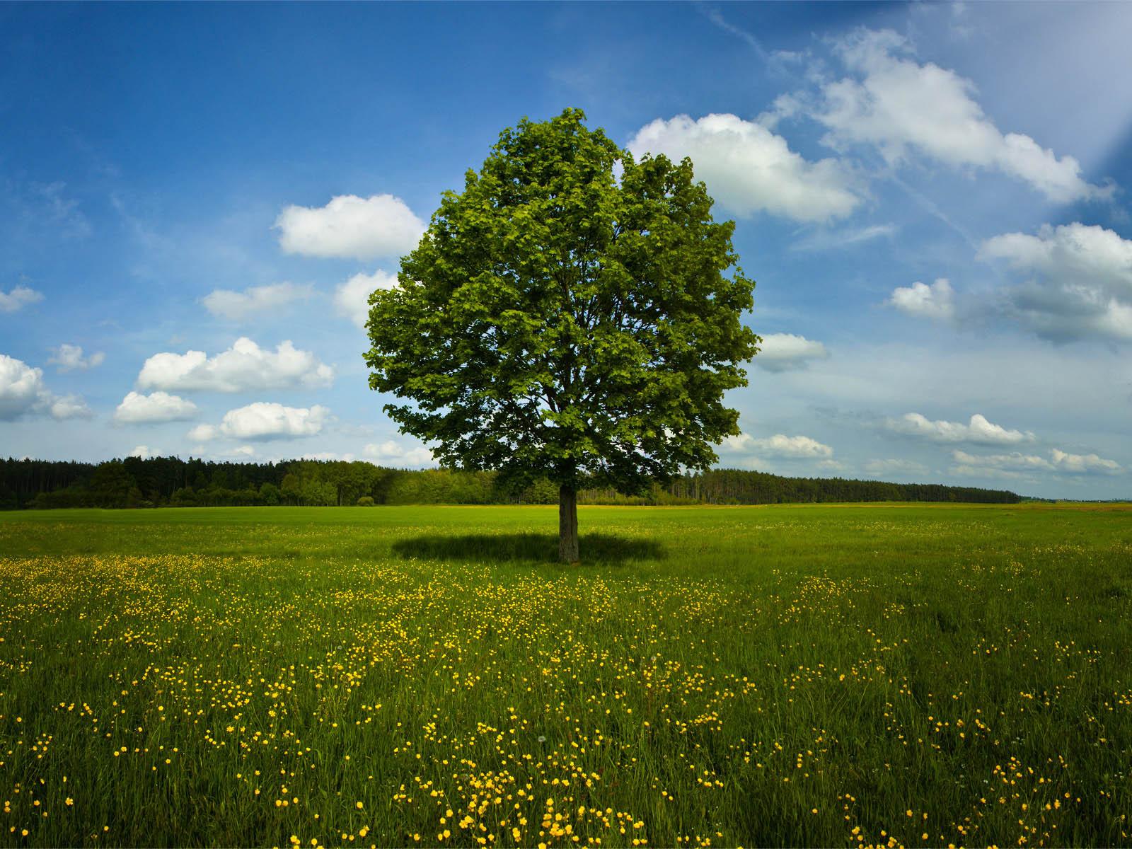 3d Photo Wallpaper Free Download Wallpaper Tree In Field