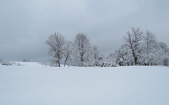 Drzewa w Polanach Surowicznych.