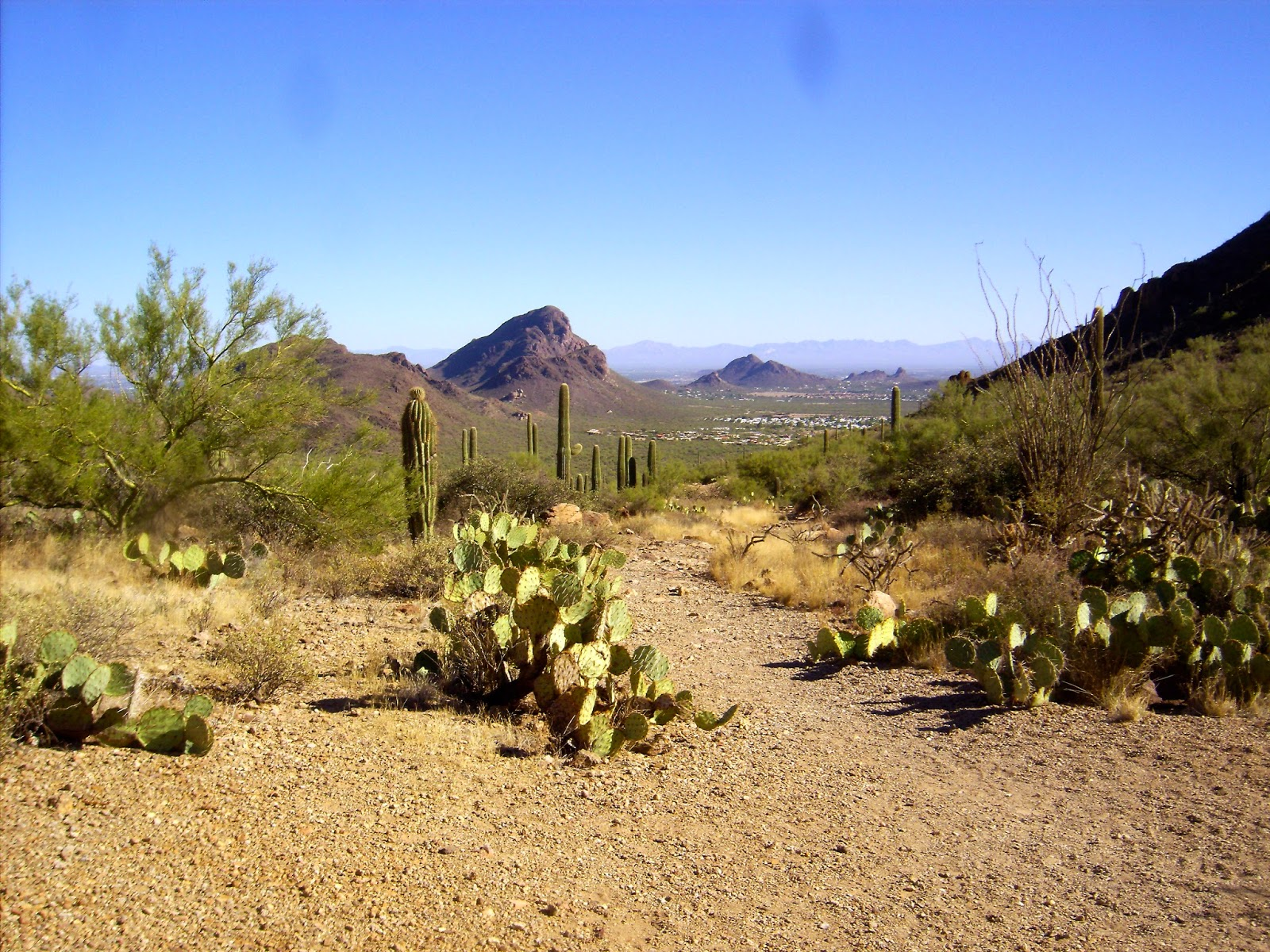 hiking in tucson mountain park
