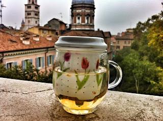 Roibos tè