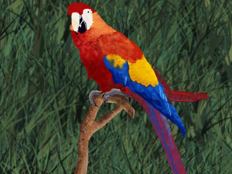 Wallpapers Collection Royal Parrots Love It