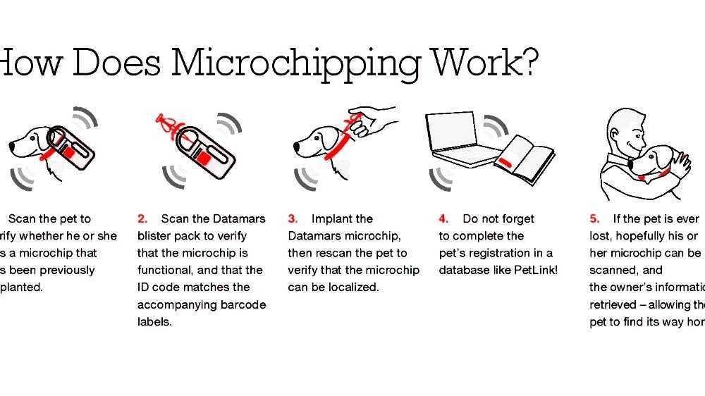 Microchip implant (animal)