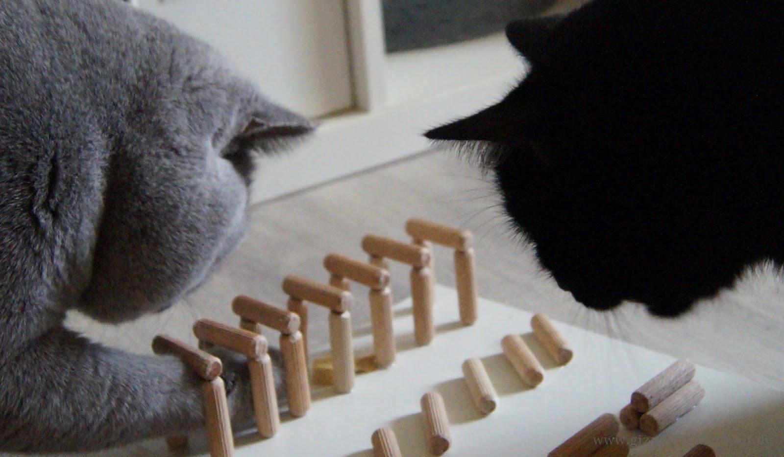 Katzenblog alltag auf 4 pfoten diy fummelbrett aus - Wanddekoration ka che selber machen ...