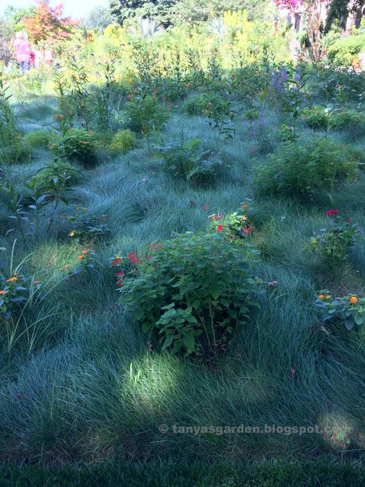 MySecretGarden Zone A Low Maintenance Garden Design Html on