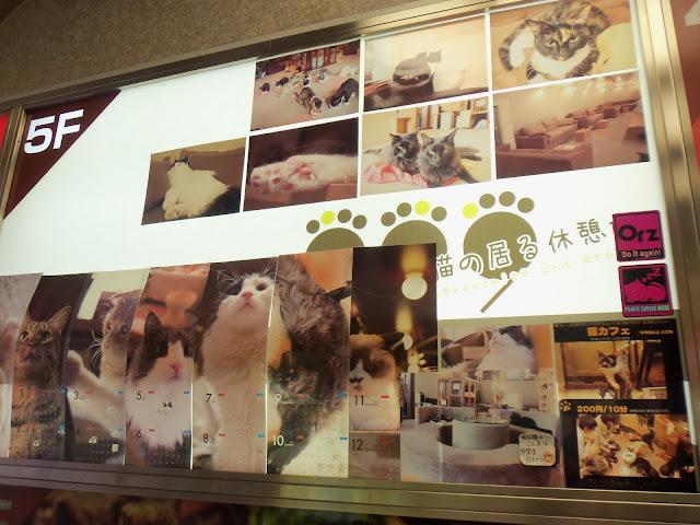 Neko cafes japonesos (Cafeteries de gats)