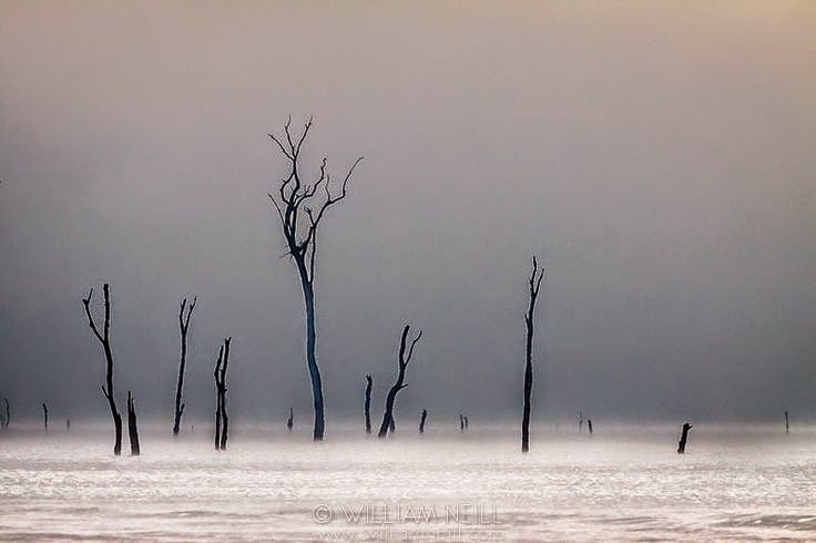 Dead Forest near Nagarhole National Park