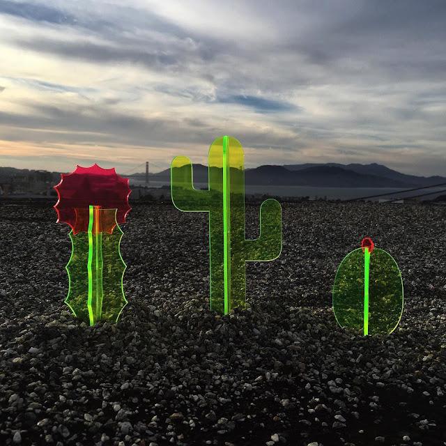 砂漠の中に生えた不思議な蛍光サボテンの正体は?【a】