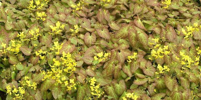 April 2019 - the leaf herbal