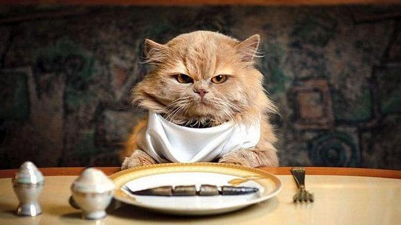Inilah Tiga Pertanda Jika Kucing Datang Mendekati Kita Saat Makan