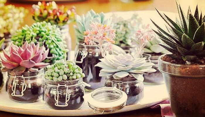 Cactus como cuidarlos