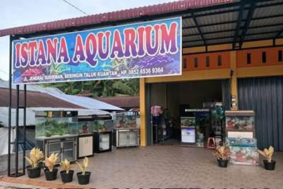 Lowongan Istana Aquarium Dan Petshop Taluk Kuantan Agustus 2018