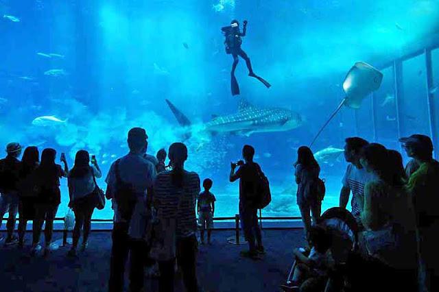 aquarium, fish, people, tourists, Okinawa