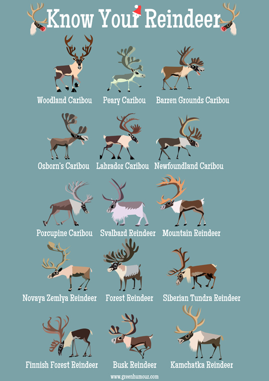 Green Humour: Know Your Reindeer