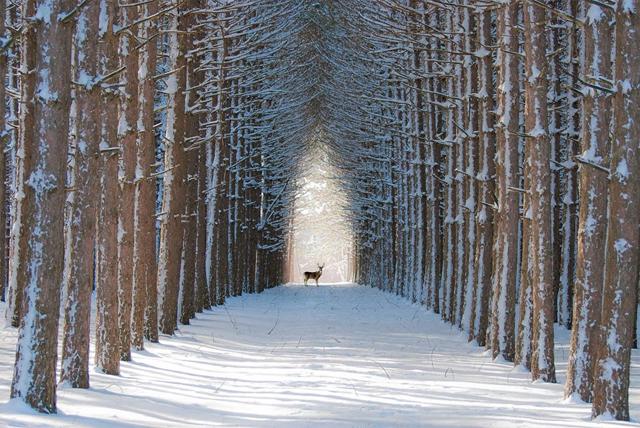 Quebec Kanada'da Ormanda Kış Örtüsü