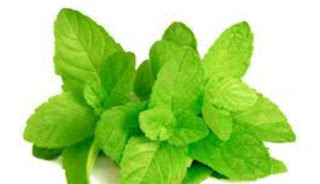 Manfaat dan Khasiat Minyak Esensial Peppermint untuk Menurunkan Berat Badan