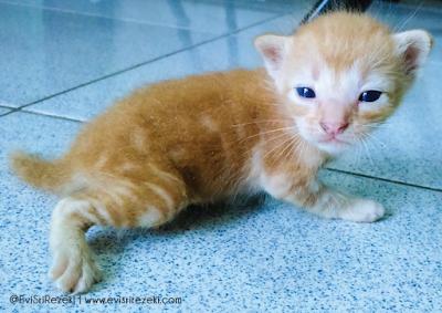 Miura dan Empat Generasi Kucing