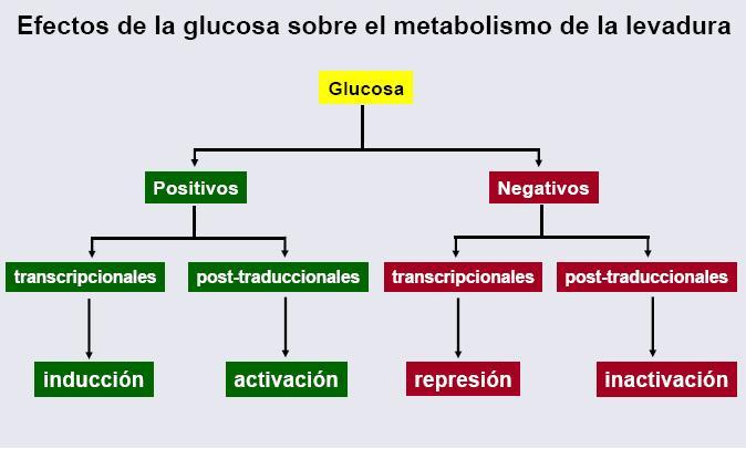 Tres consejos de un metabolismo insulina pro
