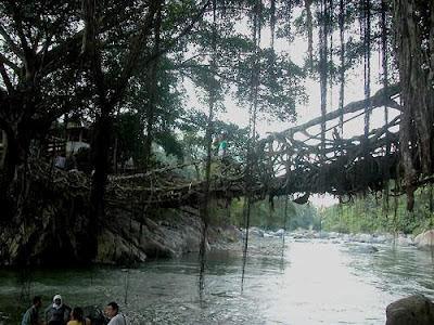 Jembatan Akar Pohon paling unik dan aneh di indonesia
