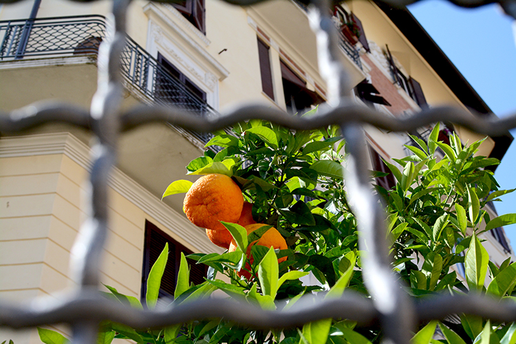 Oranges in Rome
