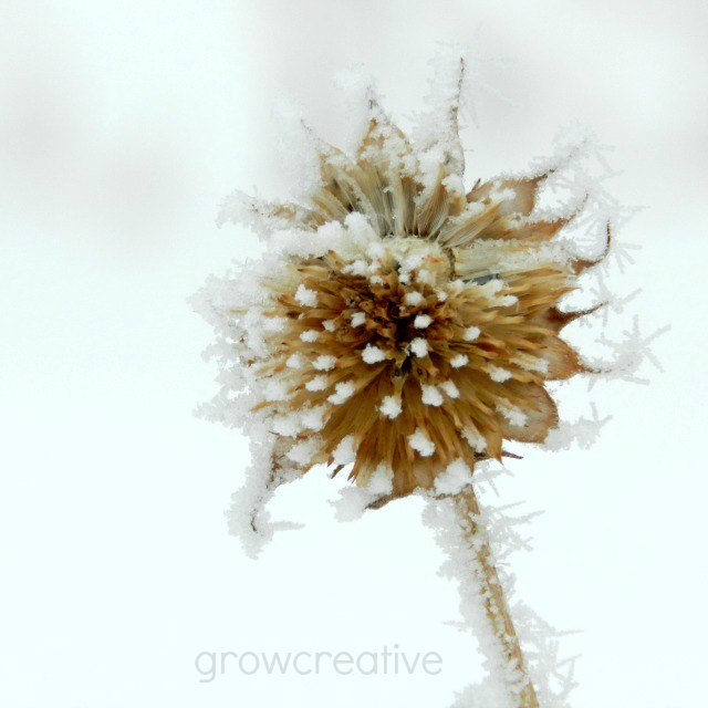 frosty flower: growcreative