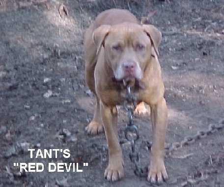 RED BOY/JOCKO | SPORTING DOG NEWS
