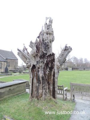 Robin Hood Yew, Hartshead, West Yorkshire