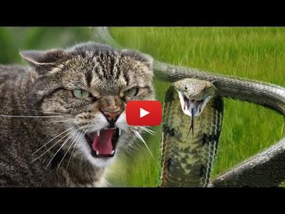 Коты и змеи