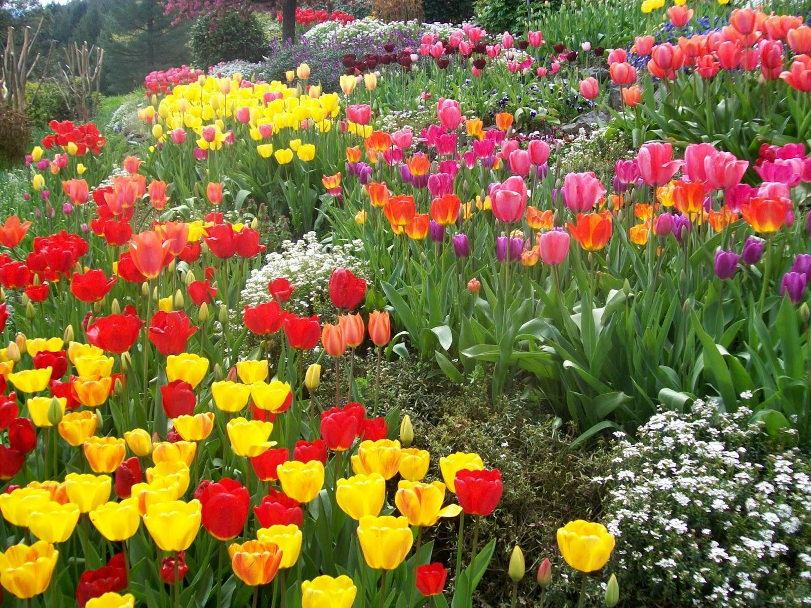 a flower garden paragraph