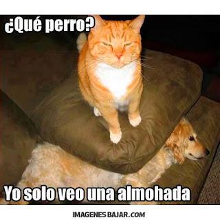 imagenes chistosas de gatos graciosas