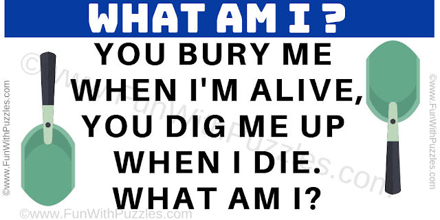 You bury me when I'm alive, You dig me up when I die.... What am I?
