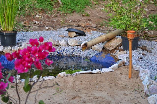 bassin, moustique, japonais
