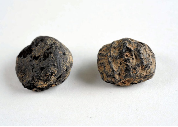 12,800 year old chestnuts from Nagano are oldest in Japan